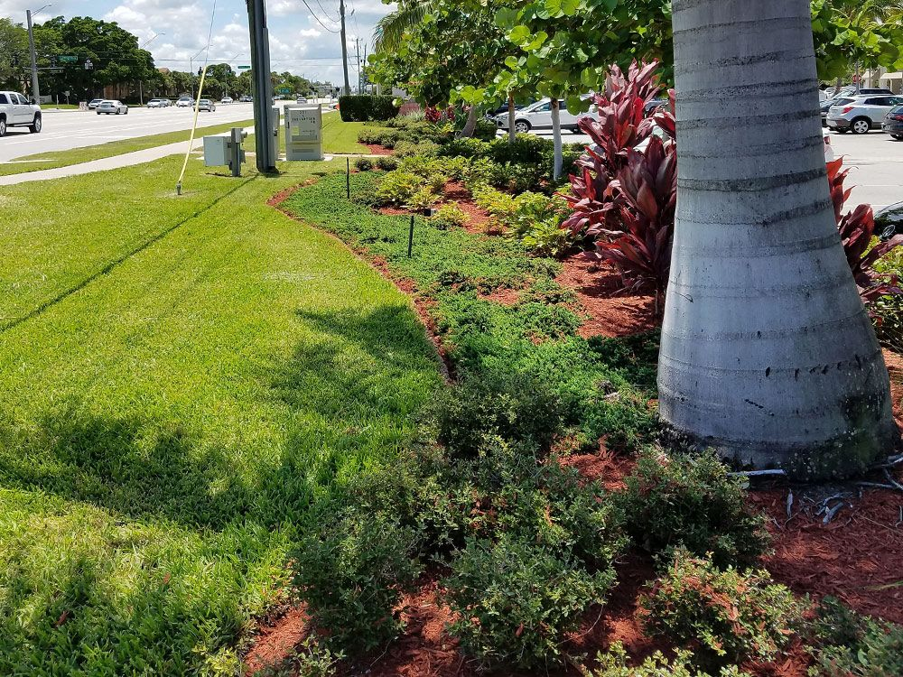 Matteos Commercial Landscaping Fresh Market Village South Florida